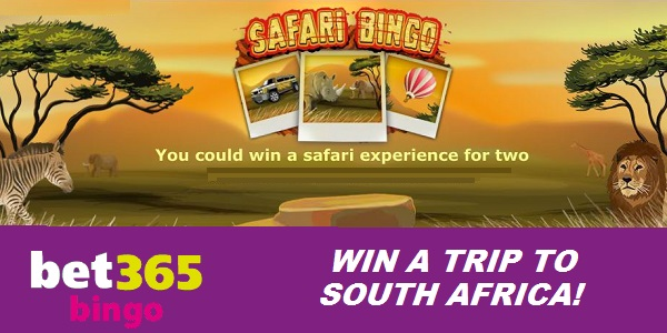 Play at Bet365 Bingo and Win a Safari Trip to South Africa