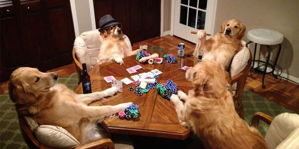 Animals playing poker
