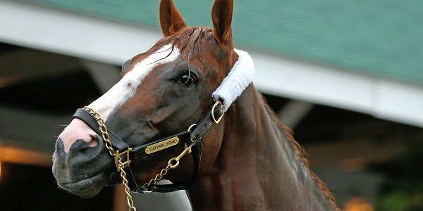 California Chrome, 2014 Kentucky Derby