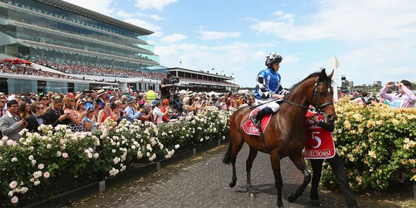 Melbourne Cup betting odds