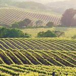 Tribal Casino Resisted by Napa Valley Winemakers