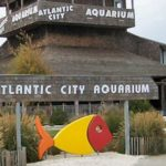 Atlantic City is Opening Up For More Than Casino Businesses