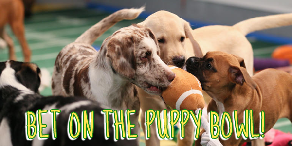 bet on the Puppy Bowl 2018