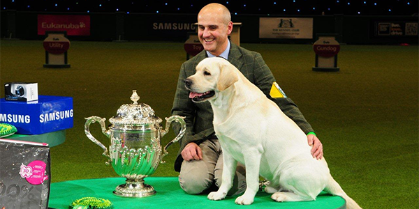 Your Last Chance to Bet on Crufts 2018 Best in Show!