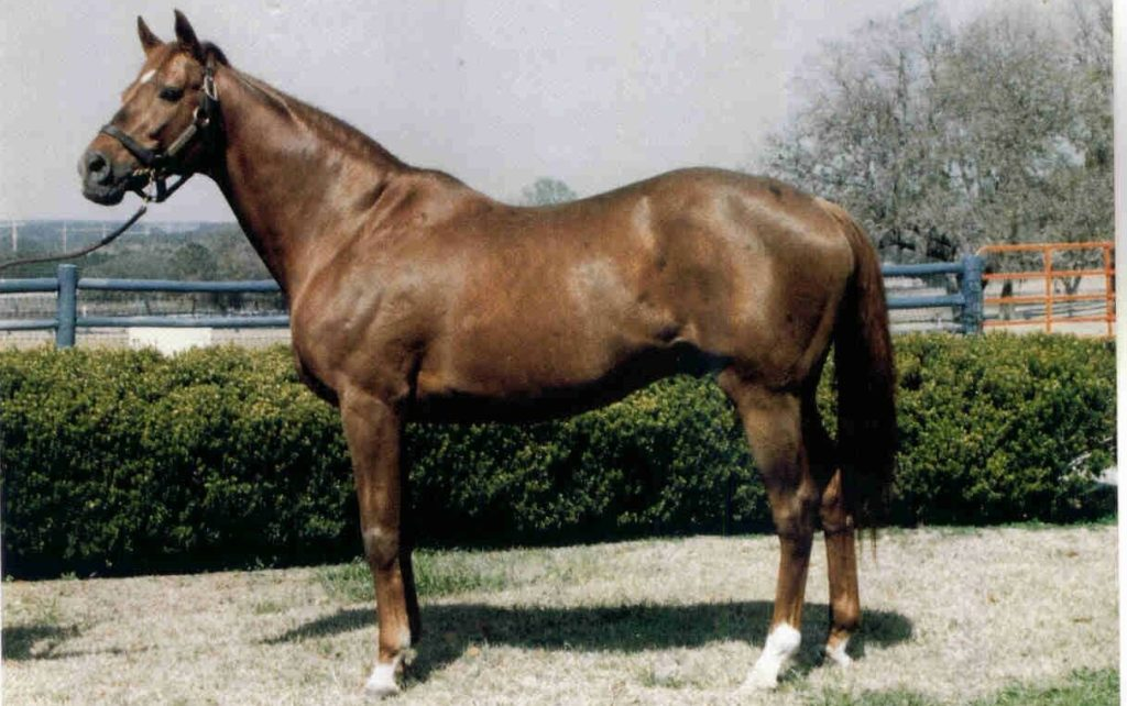 greatest racehorse, greatest racehorse in history, internet betting, online betting, Secretariat, The Belmont Stakes, triple crown winner, unbeaten horse, racing record