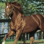 Secretariat the Greatest Racehorse in History