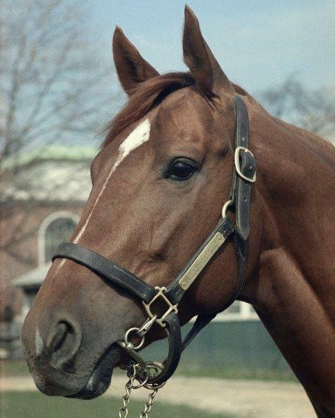 greatest racehorse, greatest racehorse in history, online betting, Secretariat, The Belmont Stakes, triple crown winner, unbeaten horse, racing record