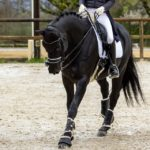 A 7 Step Guide On How To Win Money Betting On Dressage