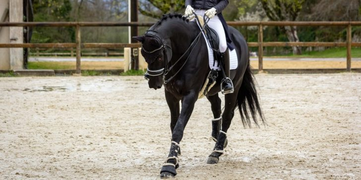 How To Win Money Betting On Dressage, UK gambling laws, Bet on sports in the UK, Online betting sites in the UK, Online sportsbook sites in the UK, Bet365, Equestrian betting odds, Dressage odds, Olympics, 2020,