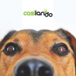 Get Casilando Casino Loyalty Points for Every €10 Wager
