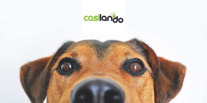 Casilando Casino loyalty points