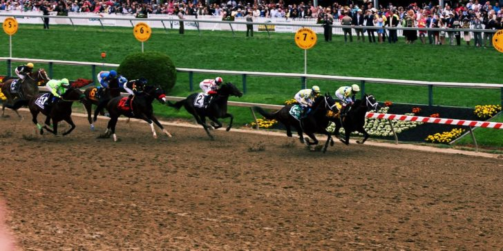 preakness stakes 2020 betting odds
