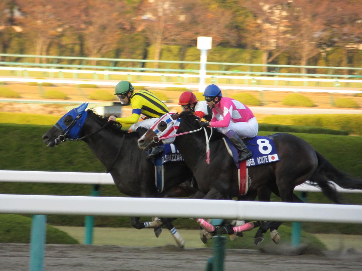 How to bet on horses in japan binary options scams cedar finance 60