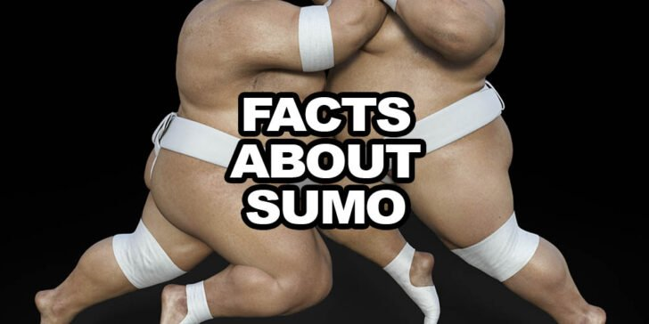 Interesting facts about sumo