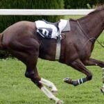 The Future of Horse Racing: Disparate Views on the Traditional Sport