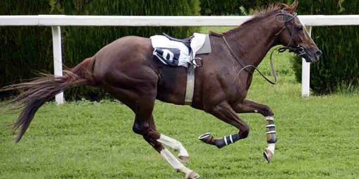 the future of horse racing
