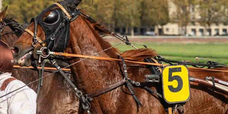 Horse Racing for Charity