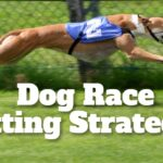 Dog Race Betting Strategies for Pros